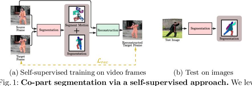 Figure 1 for Motion-supervised Co-Part Segmentation