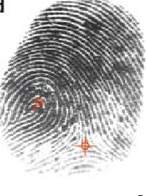 Figure 3 for Minutiae Extraction from Fingerprint Images - a Review