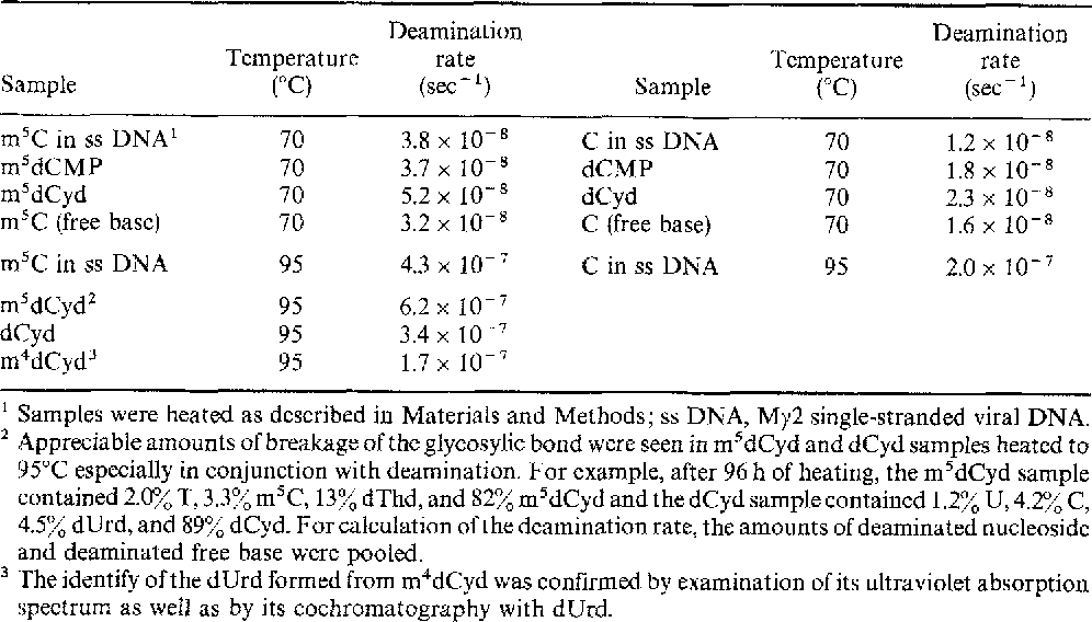 Table 1. Comparison of deamination rates of mSC, C, and m4C derivatives