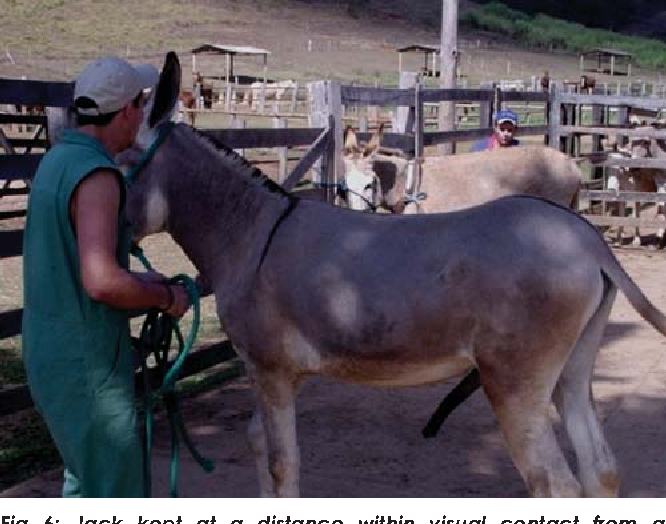 PDF] Strategies for the management of donkey jacks in intensive