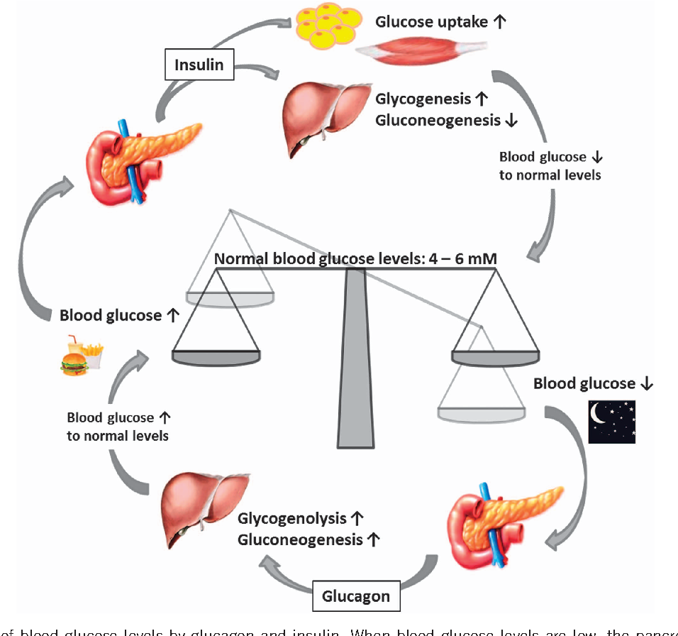 Figure 2 From Pancreatic Regulation Of Glucose Homeostasis