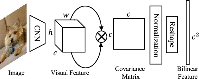 Figure 1 for Multi-Objective Matrix Normalization for Fine-grained Visual Recognition