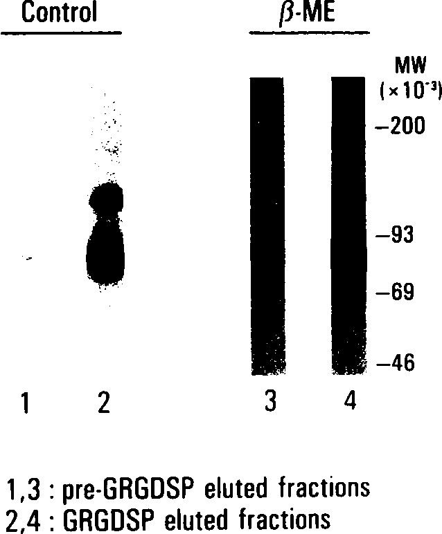 Fig 3. Affinity isolation of the GPIIb(H)-Illa complex on immo-