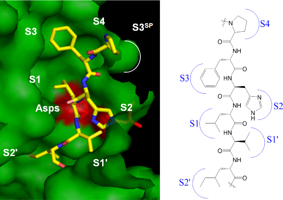 Figure 2. X-ray crystal structure of renin complexed with angiotensinogen [PDB entry 2X and Asp215) are highlighted in red. On the right, the chemical structure of the 6 amino a the schematic representation of distinct binding pockets.