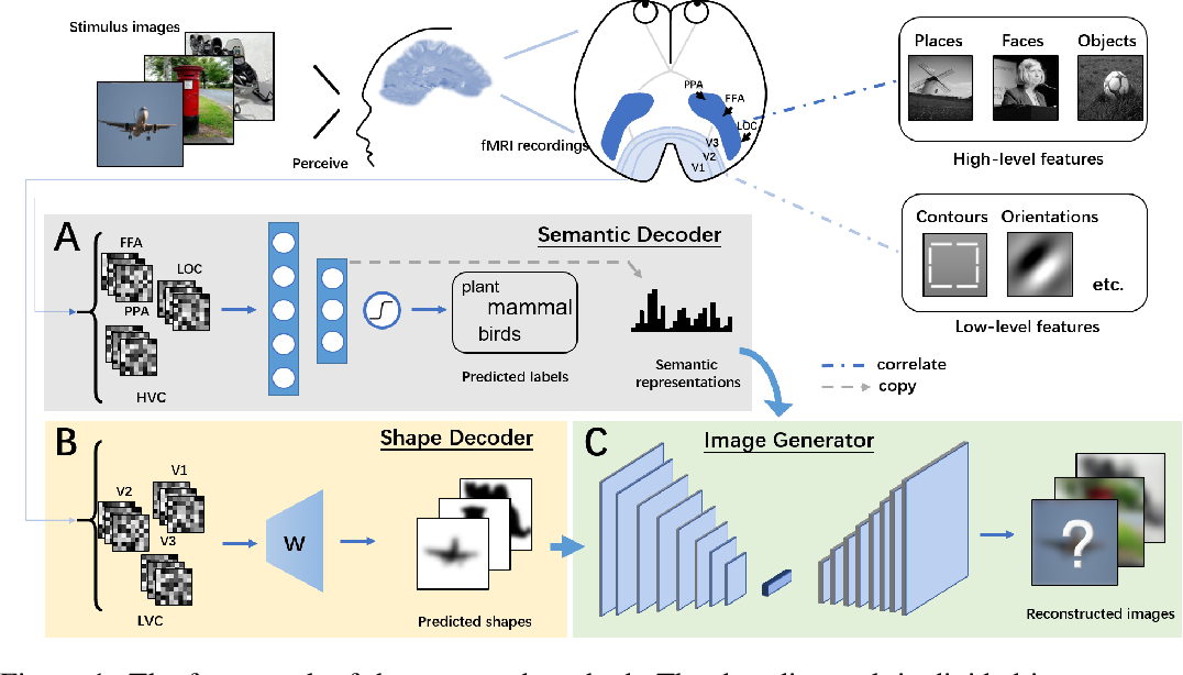Figure 1 for Reconstructing Perceptive Images from Brain Activity by Shape-Semantic GAN