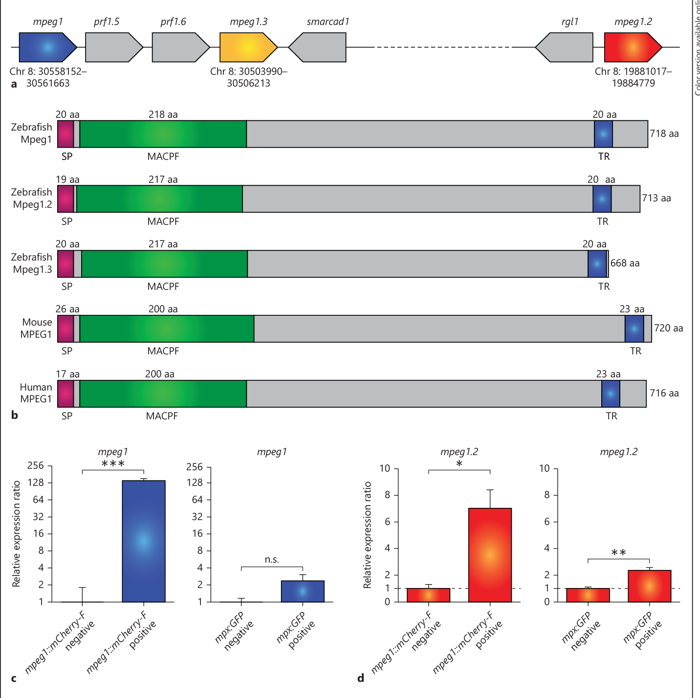 Figure 1 From Macrophage Expressed Perforins Mpeg1 And Mpeg12 Have Mpeg Block Diagram Zebrafish Genes Encode Proteins With Conserved Transmembrane Macpf Domains