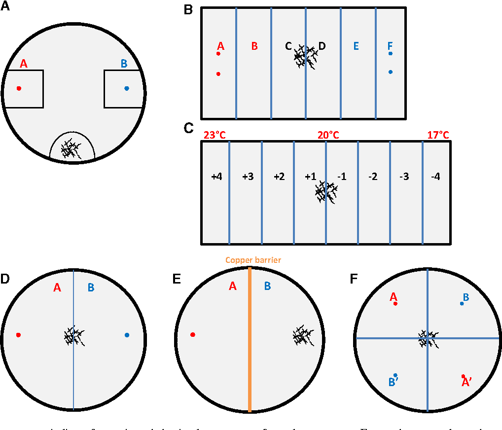 Nemacount quantification of nematode chemotaxis behavior in a figure 2 pooptronica Gallery