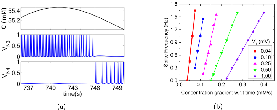 Figure 3 for A neural circuit for navigation inspired by C. elegans Chemotaxis