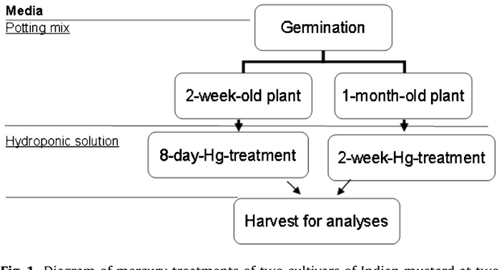 Figure 1 From Phytotoxicity Of Mercury In Indian Mustard Brassica
