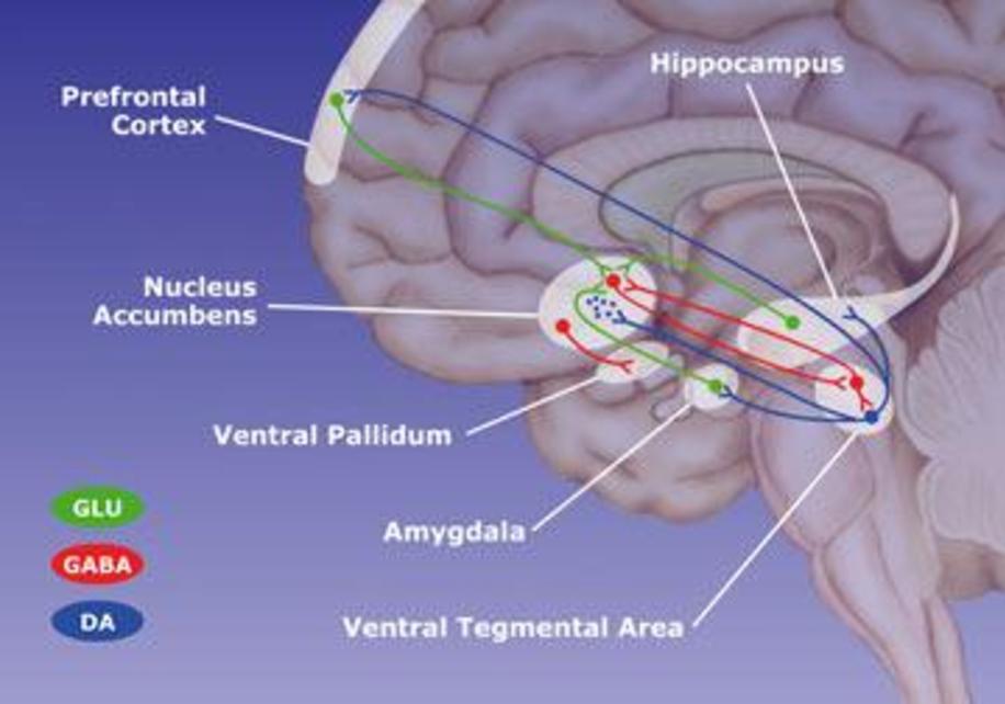 Ventral Tegmental Area Neuronal Responses to Methylphenidate ...