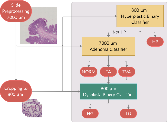 Figure 4 for UniToPatho, a labeled histopathological dataset for colorectal polyps classification and adenoma dysplasia grading