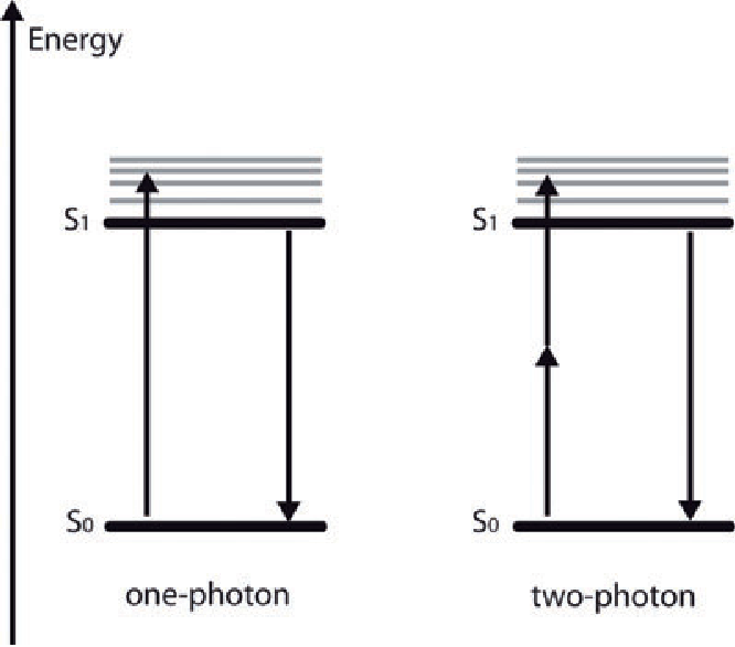 Figure 1 From A Simple Introduction To Multiphoton Microscopy