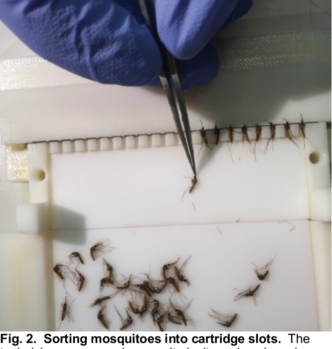 Figure 3 for An Efficient Production Process for Extracting Salivary Glands from Mosquitoes