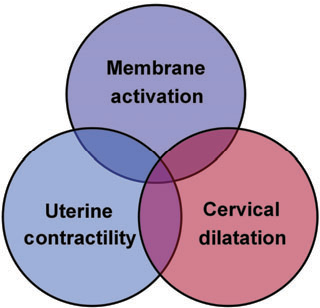 A blueprint for the prevention of preterm birth vaginal figure 1 ccuart Choice Image