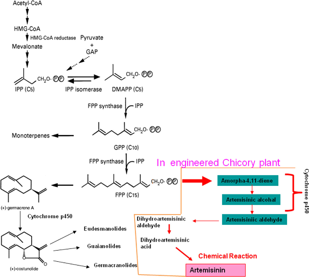 Genetic Engineering Of Artemisinin Biosynthesis Prospects To Diagram Improve Its Production Semantic Scholar