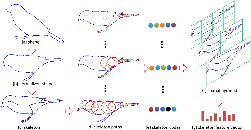 Figure 3 for Shape Recognition by Bag of Skeleton-associated Contour Parts