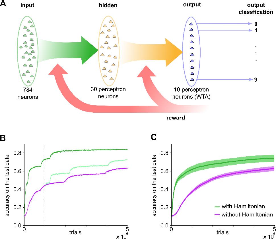Figure 4 for CaMKII activation supports reward-based neural network optimization through Hamiltonian sampling