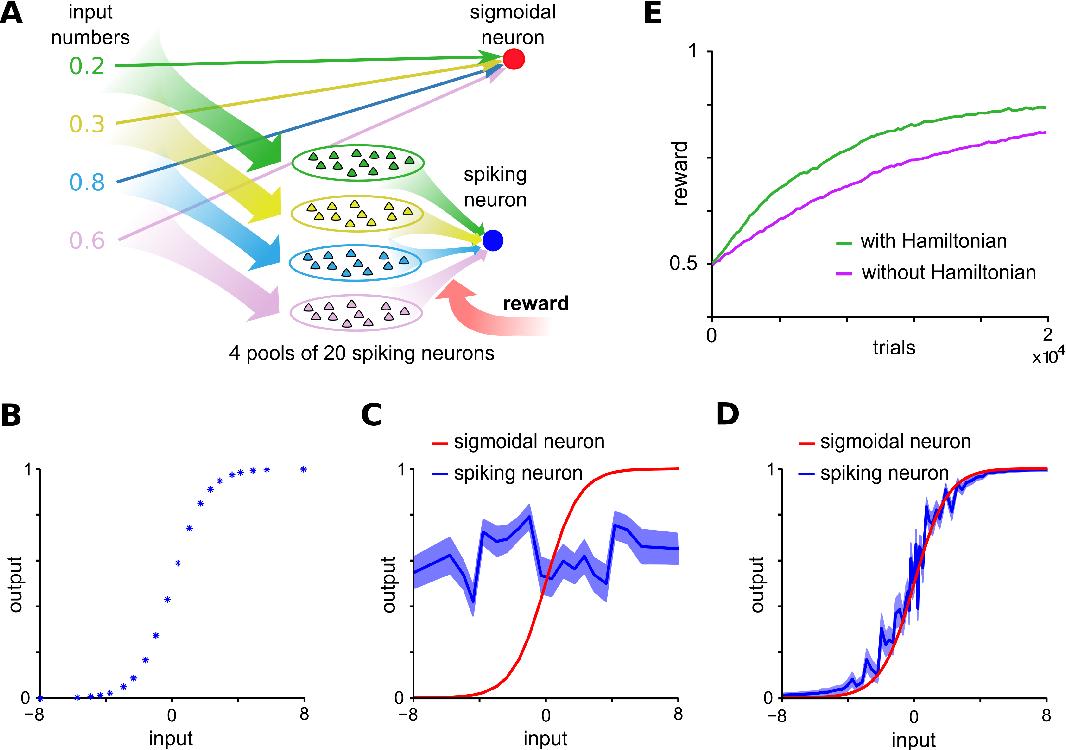 Figure 2 for CaMKII activation supports reward-based neural network optimization through Hamiltonian sampling