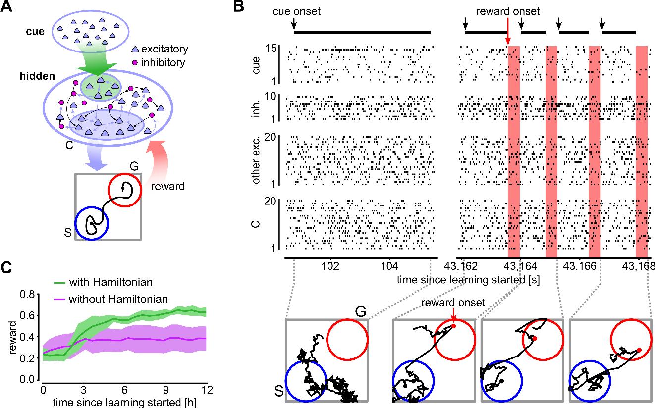 Figure 3 for CaMKII activation supports reward-based neural network optimization through Hamiltonian sampling