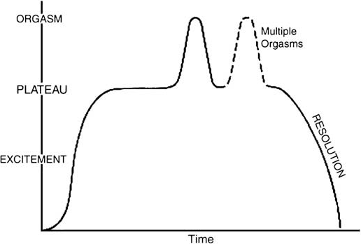 Human sexual response cycle definition
