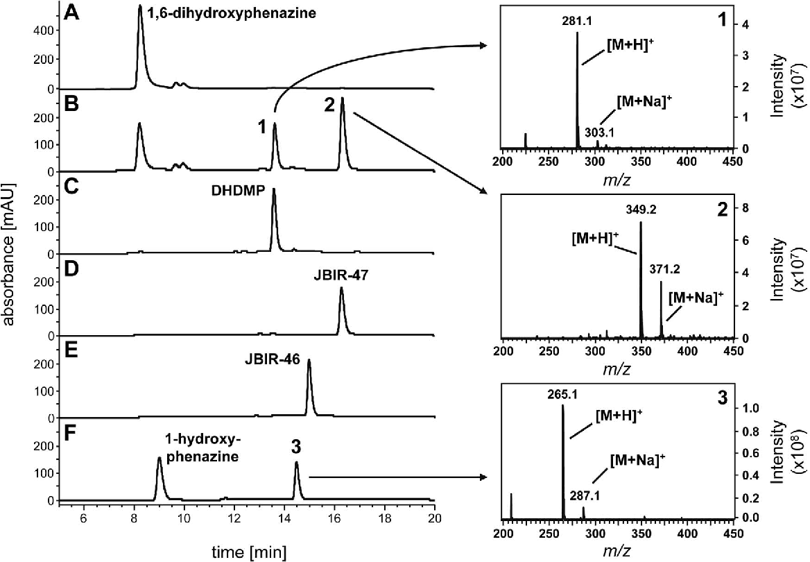 Figure 3. HPLC and LC-MS analysis of the reaction products of Mpz10. (A) and (B): Incubations containing 1,6-dihydroxyphenazine, dimethylallyl diphosphate (DMAPP), and Mg2+ with the membrane fractions of E. coli harboring either the empty vector pET-28a(+) (A) or the Mpz10 expression vector pPH23 (B). (C) Authentic DHDMP (structure see Figure 2B). (D) and (E): Authentic JBIR-47 and JBIR-46 (structures see Figure 1B). (F) Incubation containing 1-hydroxyphenazine, DMAPP, and Mg2+ with the membrane fraction of E. coli harboring the Mpz10 expression vector pPH23 (for the structure of 3 see Figure 5). Mass spectra of the three enzymatic products are shown on the right. Detection: A-E, UV 275 nm; F, UV 368 nm. doi:10.1371/journal.pone.0099122.g003