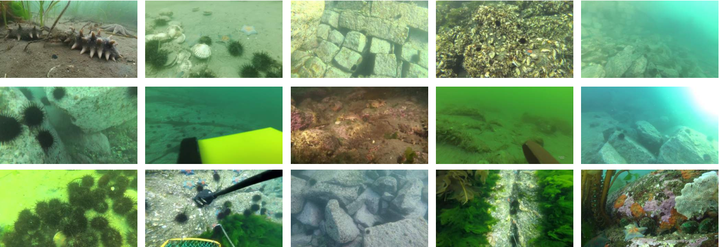 Figure 2 for A Dataset And Benchmark Of Underwater Object Detection For Robot Picking