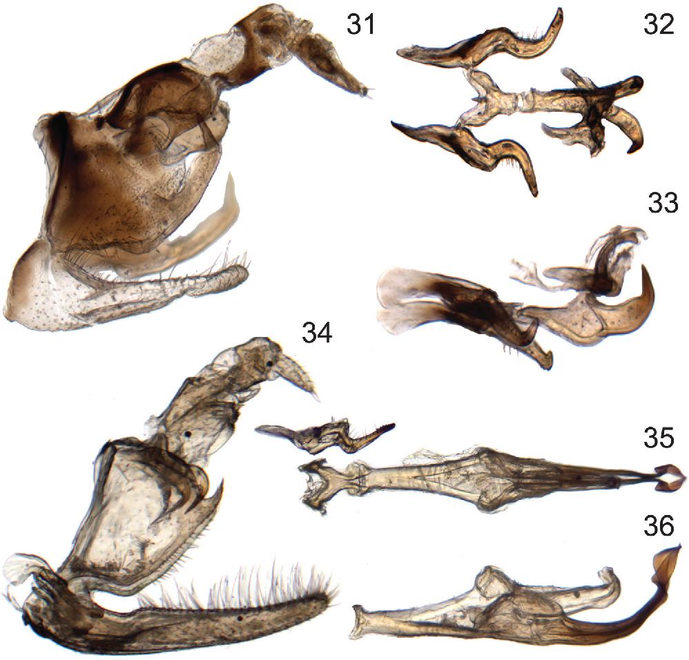 figure 31–36