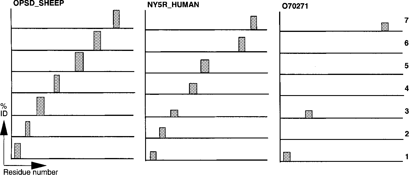 Fig. 6. Comparative fingerprint profiles depicting rhodopsin-like GPCR fingerprints of OPSD_SHEEP (P02700), NY5R_HUMAN (Q15761) and O70271. OPSD_SHEEP and NY5R_HUMAN are known true-positive family members, matching all seven TM domains, but differences in TM domain 3 mean that NY5R_HUMAN is not diagnosed by PROSITE; and O70271 is an outlying partial match that demonstrates a poor, but nevertheless tantalizing, set of matches with motifs 1, 3 and 7.