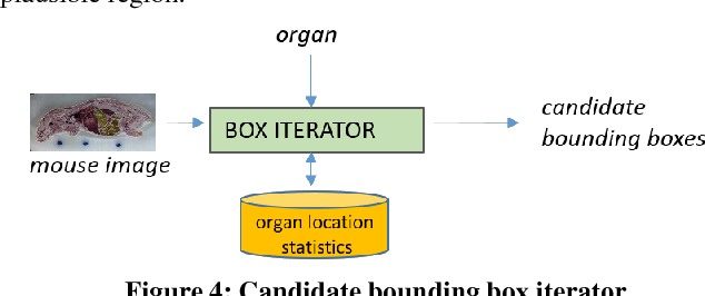 Figure 4 for Automated Mouse Organ Segmentation: A Deep Learning Based Solution