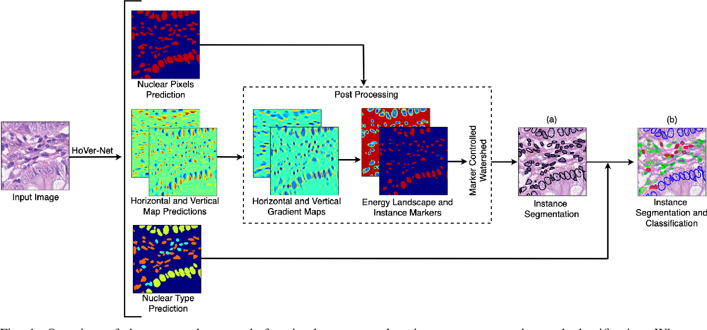 Figure 1 for XY Network for Nuclear Segmentation in Multi-Tissue Histology Images