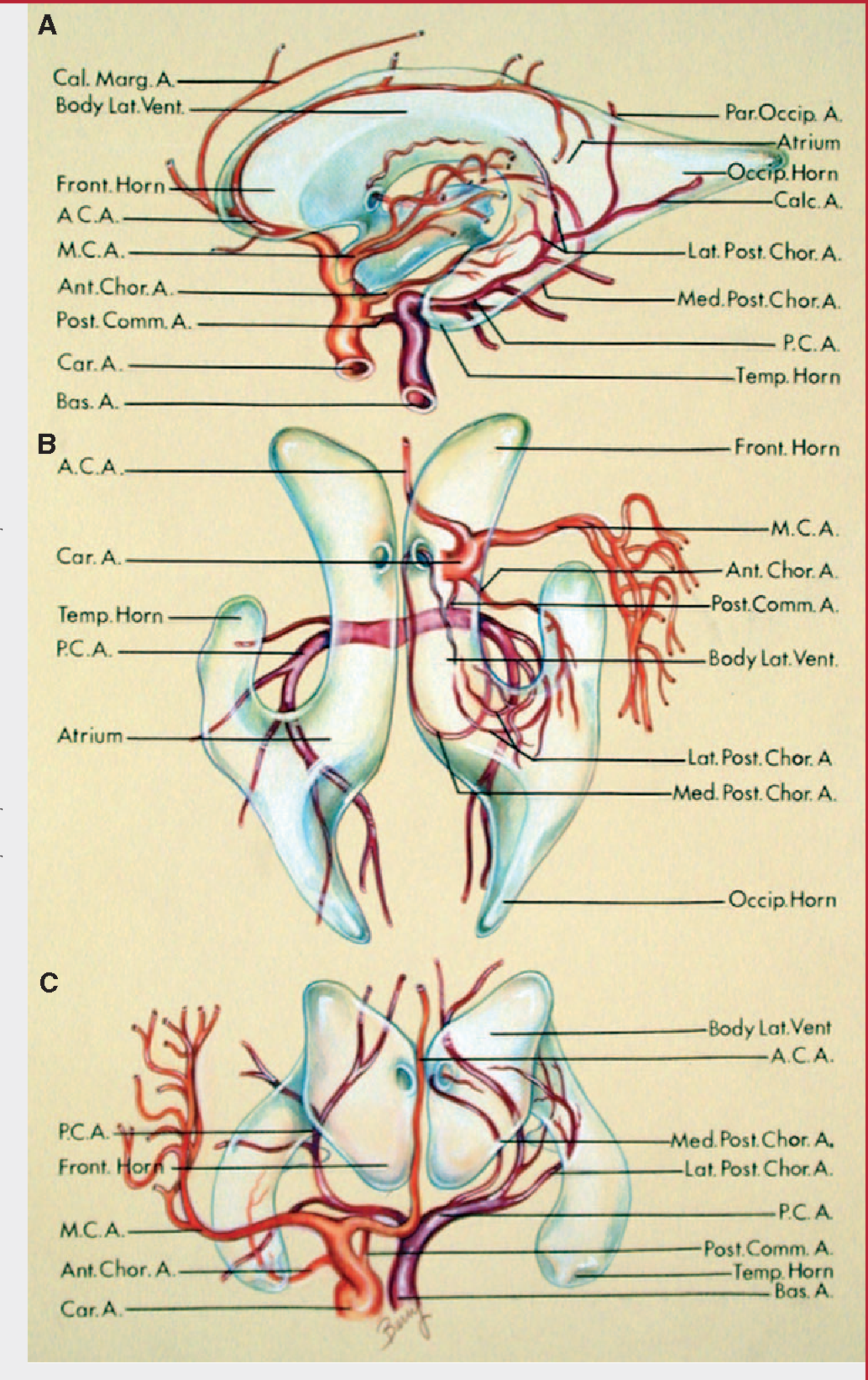 Figure 18 from The cerebrum. Anatomy. - Semantic Scholar