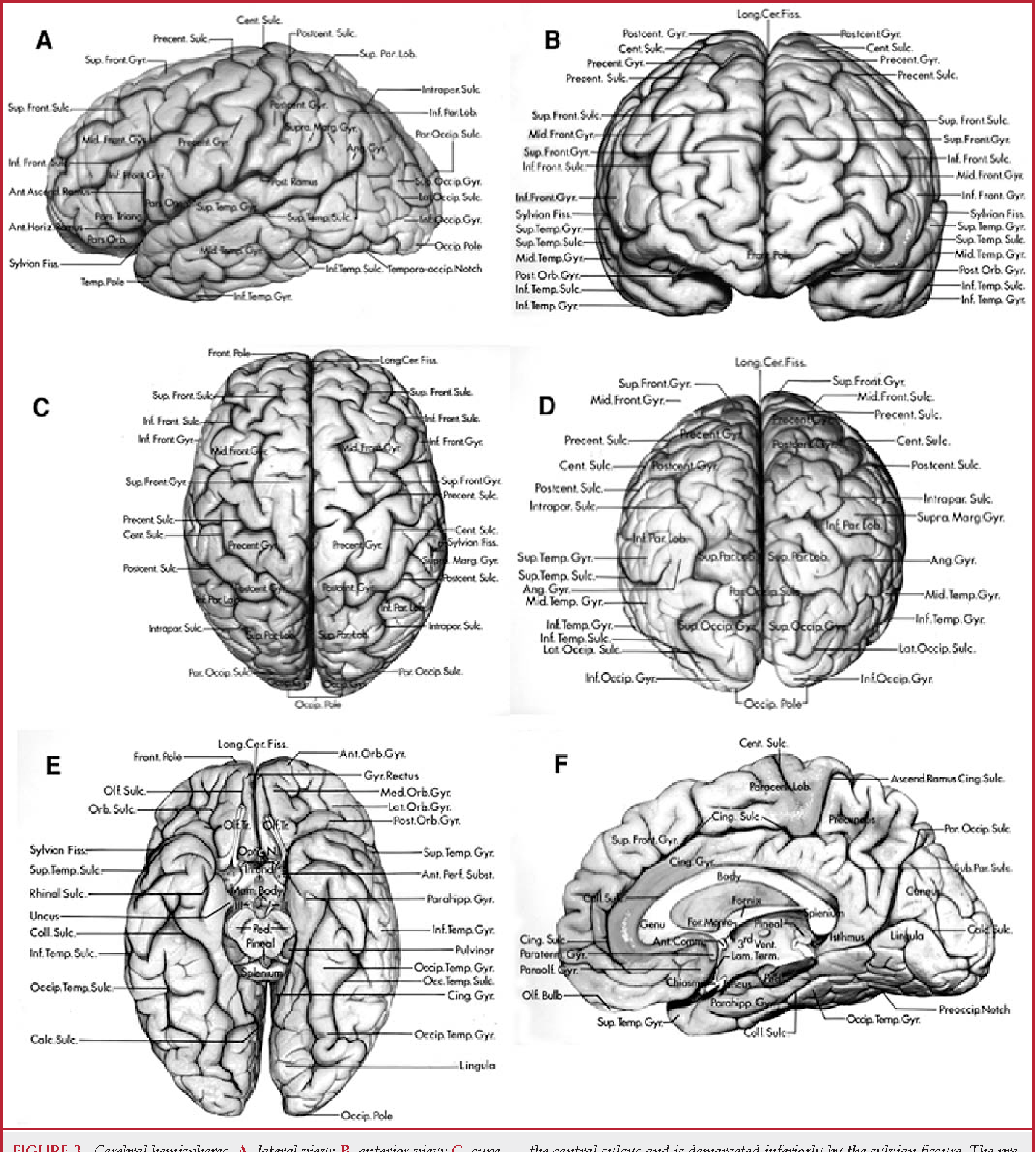 Figure 16 from The cerebrum. Anatomy. - Semantic Scholar