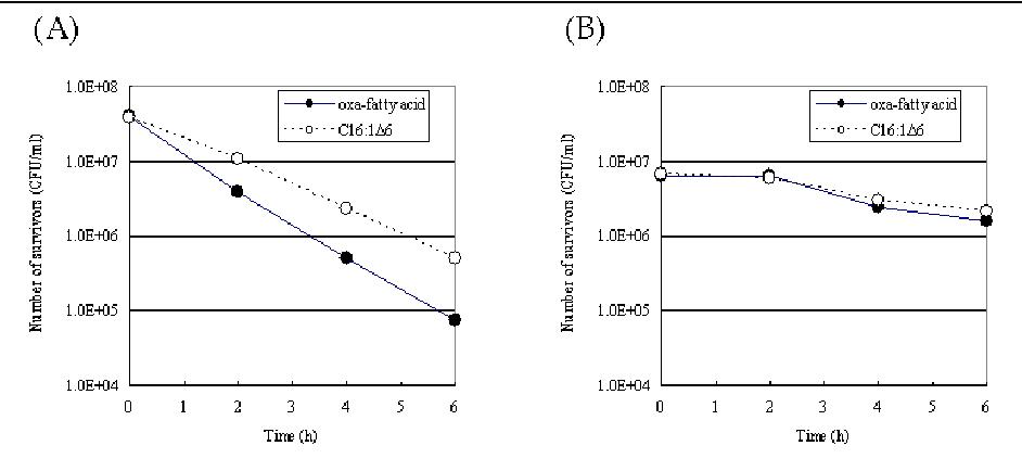 Fig. 11. Antibacterial activity of 7-oxaheptadecanoic acid. A: S. aureus; B: S. epidermidis