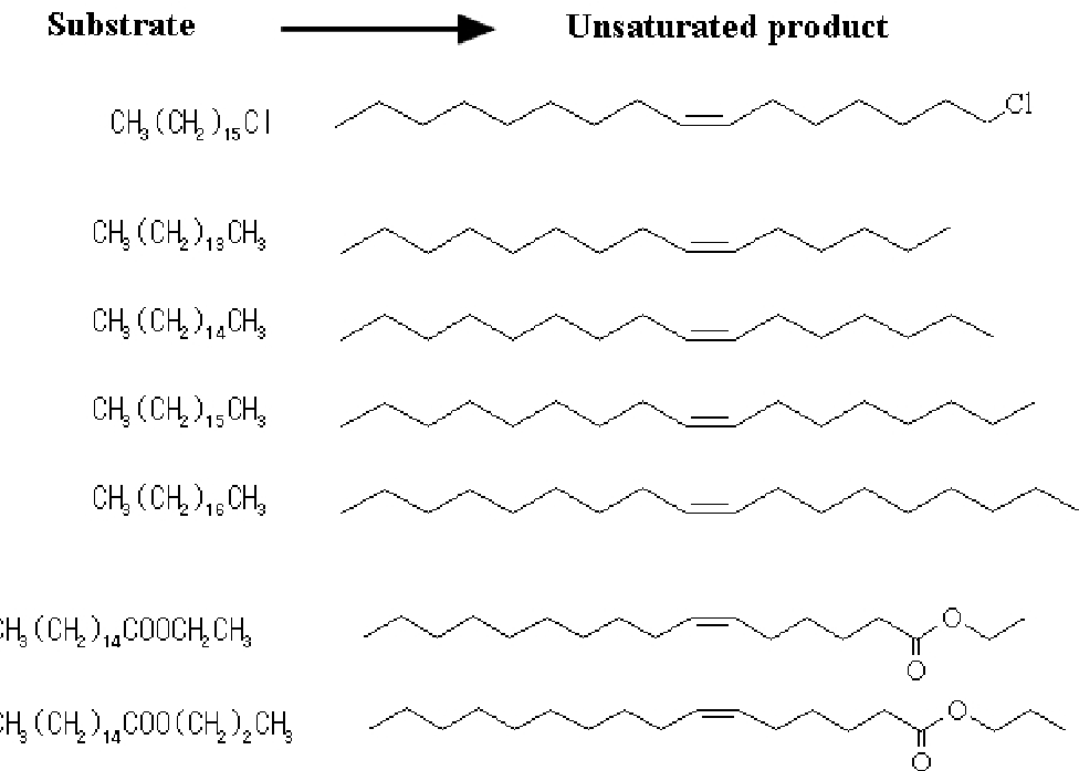 Fig. 5. The patterns of regiospecific desaturation of aliphatic substrates by Rhodococcus sp. strain KSM-MT66 cells.