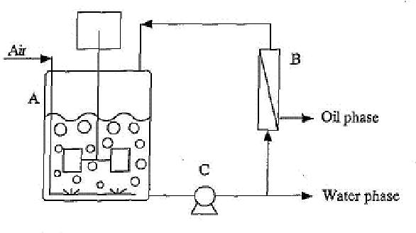 Fig. 6. Schematic diagram of the membrane bioreactor system for Rhodococcal bioconversion. (A) Reactor vessel; (B) Hydrophobic hollow-fiber module; (C) Circulation pump.