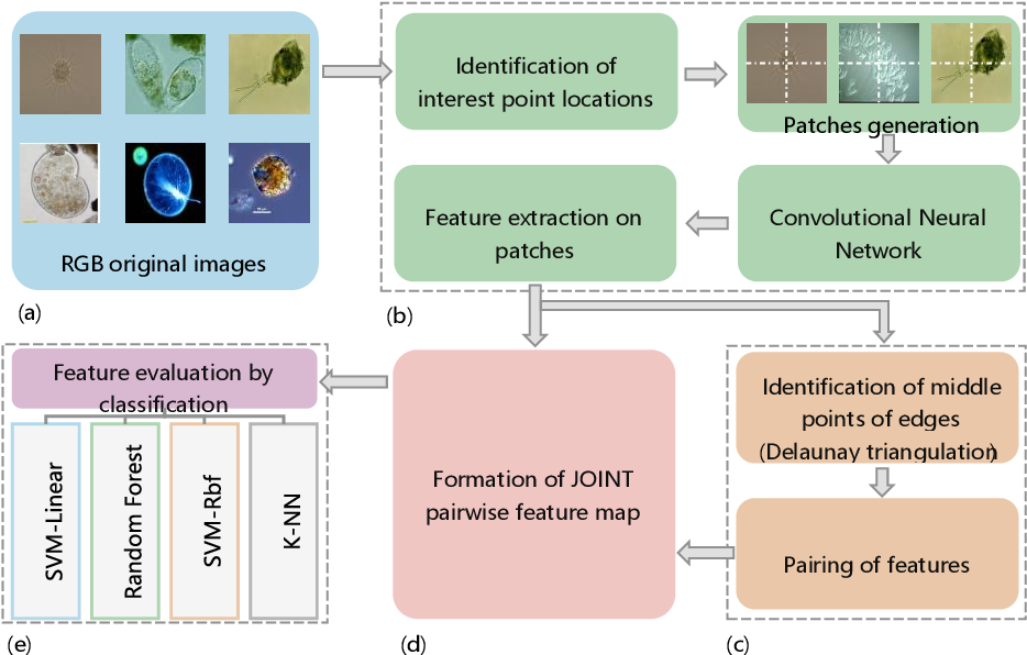 Figure 1 for A New Pairwise Deep Learning Feature For Environmental Microorganism Image Analysis