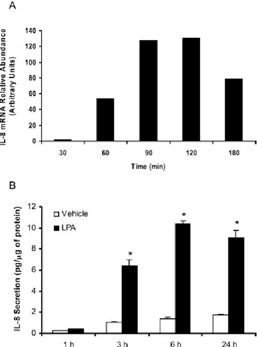 Figure 1 LPA stimulates IL-8 gene expression and secretion in HBEpCs