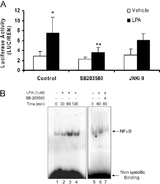 Figure 7 Effect of MAPK inhibitors on LPA-induced NF-κB activation