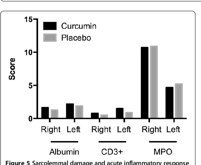 Figure 5 Sarcolemmal damage and acute inflammatory response to exercise. CD3+, CD positive cells; MPO, myeloperoxidase.