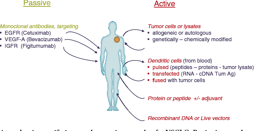 Figure 1 from Immunotherapy in the landscape of new targeted