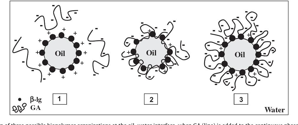 Stabilization mechanism of oil-in-water emulsions by β-lactoglobulin