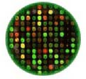 Figure 1. Scanned Microarray Image [4]