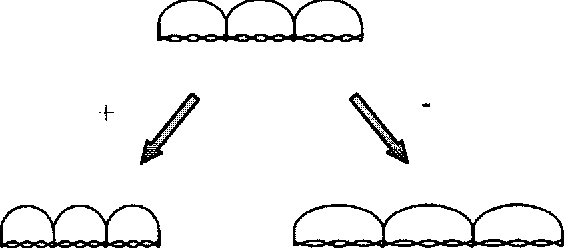 FIGURE 2 Micromechanical model for membrane deformation. Curvature changes in the elemental motile unit cause extension of the spectrin molecules attached to the pillars. Three units are shown in the figure. A depolarization (1) leads to a decrease in the radius of curvature and a shortening of the cell and hyperpolarization (2) leads to an increase in the radius of curvature and cell lengthening.