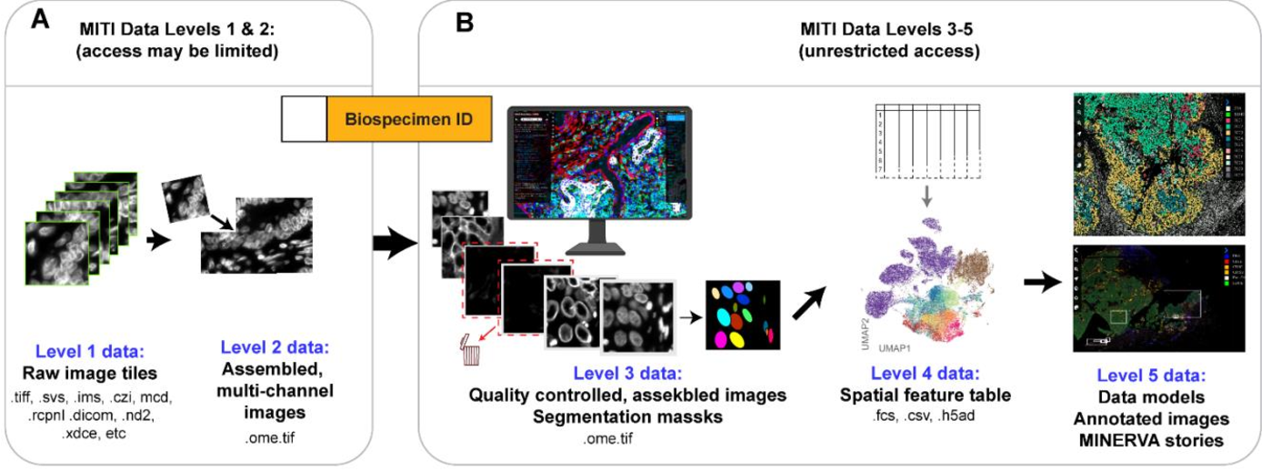 Figure 2 for MITI Minimum Information guidelines for highly multiplexed tissue images