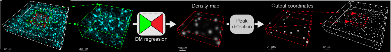 Figure 1 for Probabilistic Spatial Analysis in Quantitative Microscopy with Uncertainty-Aware Cell Detection using Deep Bayesian Regression of Density Maps