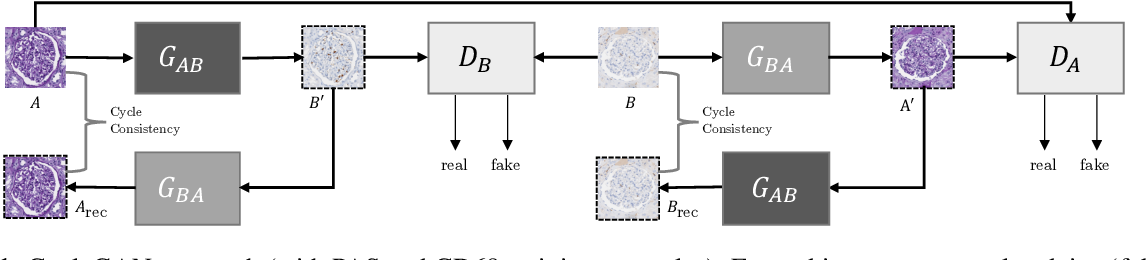 Figure 1 for Self adversarial attack as an augmentation method for immunohistochemical stainings