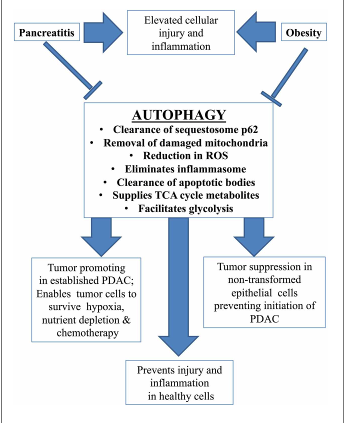 Figure 2 from Risk factors for pancreatic cancer: underlying