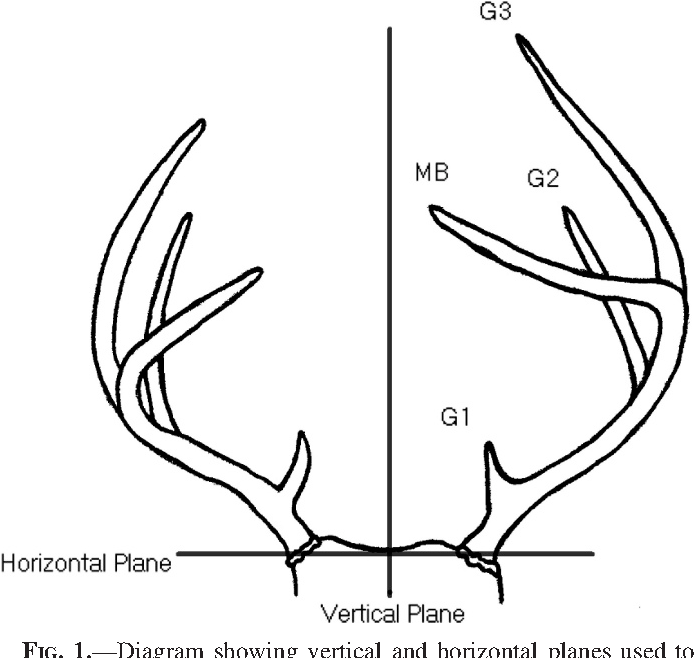 Assessing Fluctuating Asymmetry Of White Tailed Deer Antlers In A