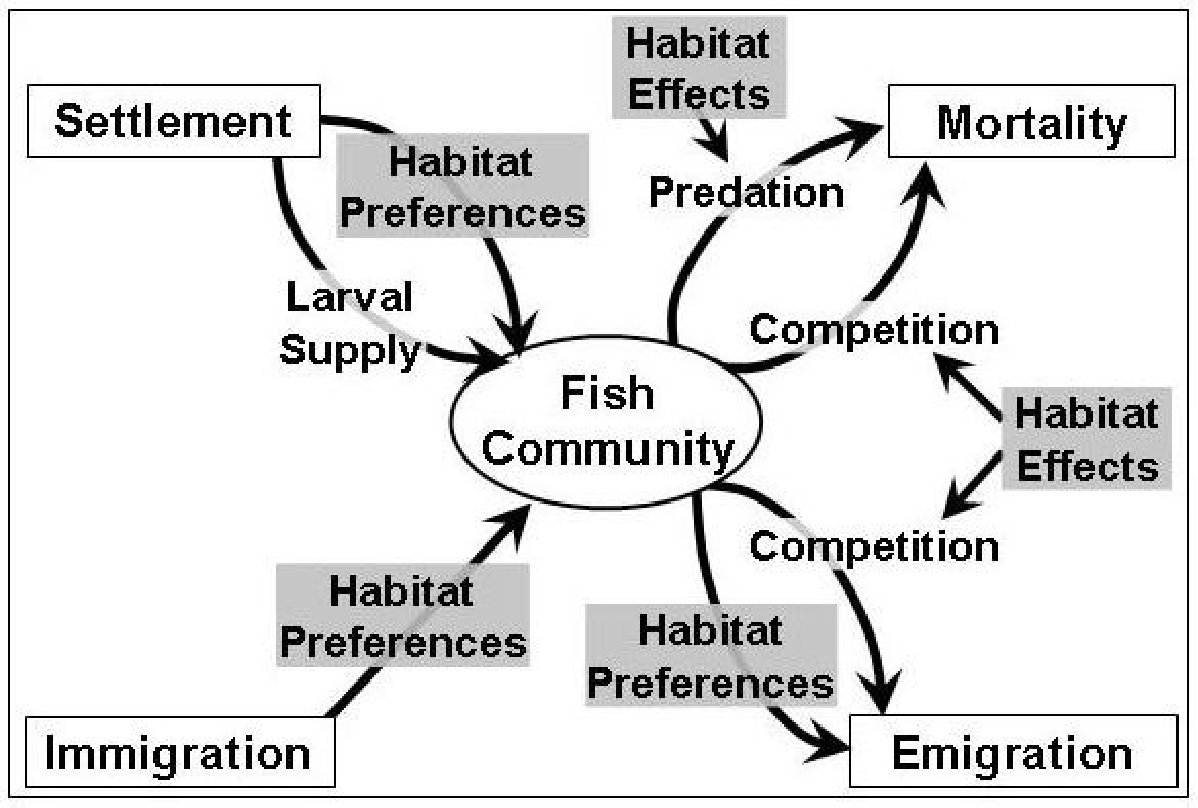 Figure 1-1: Factors affecting the influx and efflux of a population of coral reef fish. Effects are numerous, but most are influenced to some extent by habitat effects.