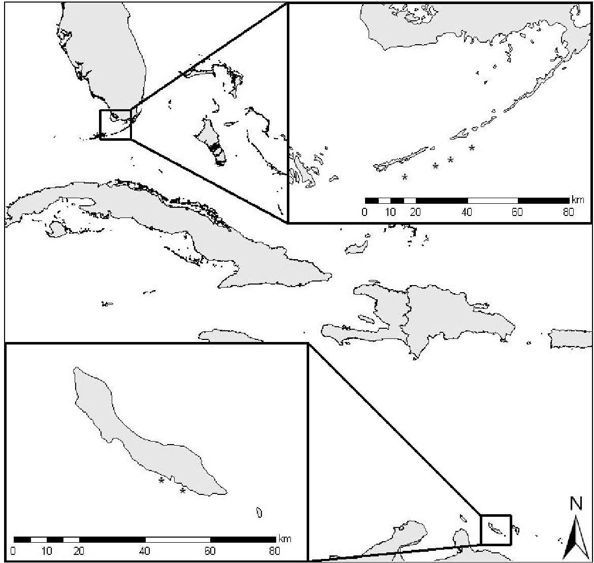 Figure 3-1: Location of survey sites (*). Florida Keys sites were located on the bank-barrier reefs offshore of Long Key and Marathon. Curacao sites were located at two locations immediately offshore of the southwest leeward side of the island.